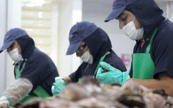 MásMar proyecta segundo año con nuevos desafíos para la industria transformadora de pesca y acuicultura