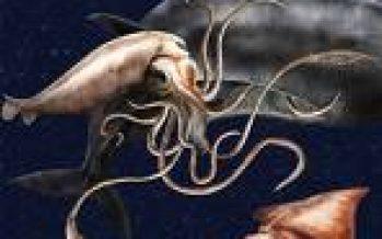 Argentina – Desembarques de calamar caen más del 50%