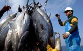 El atún cada vez más enlatado