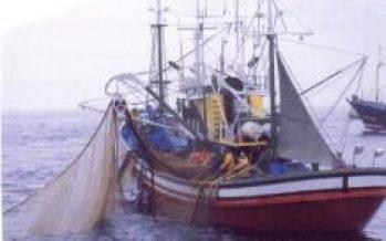 Perú – Imarpe ejecutará Operación Eureka para determinar presencia de anchoveta en el mar