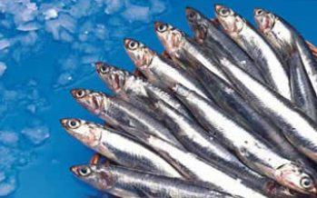 Italia: El consumo de pescado alcanza niveles históricos y no mejoran el nivel de las reservas mundiales