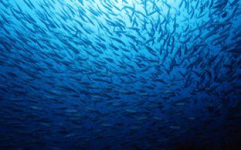 Presentación Comisión de Pesca, Acuicultura e Intereses Marítimos.