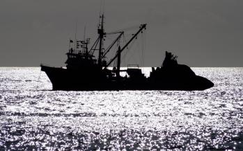 Preparan Cumbre Latinoamericana de pesca enfocada en el cuidado de los océanos y la seguridad alimentaria