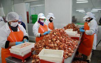 Industria crustacera a punto de recibir certificación en cadena de custodia