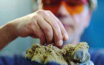 Más de 7 mil 600 toneladas de harina de pescado se han exportado por sistema Sicex-Siscomex