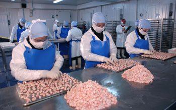 Del camarón chileno extraen poderoso aliado para el crecimiento de cultivos agrícolas