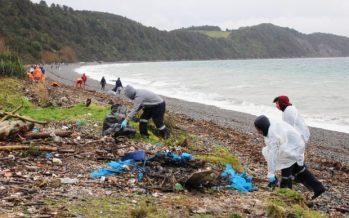 Menos basura en el mar y lucha contra la pesca ilegal: los compromisos locales para el APEC