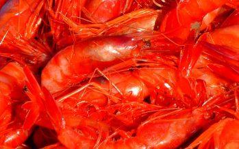 Camanchaca logra certificación internacional de sustentabilidad para la pesca del langostino