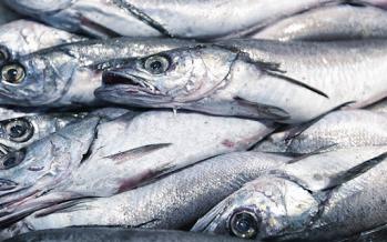 Merluza: Pesca ilegal y futura ley ponen en jaque al empleo