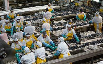 Pesca industrial destaca aumento de exportaciones entre enero y julio, pero se mantienen bajos precios