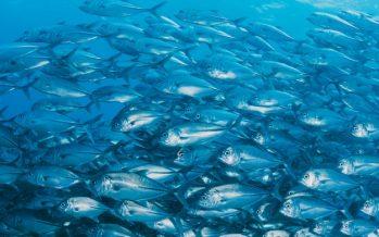 Estudio analiza el desempeño de las flotas pesqueras del norte y sur de América