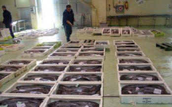 La pesca es superior en 40 millones de toneladas a las cifras estimadas por FAO