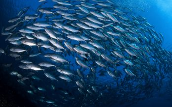 """Participa del Seminario """"Recuperación de Pesquerías: Programas y Estrategias"""""""