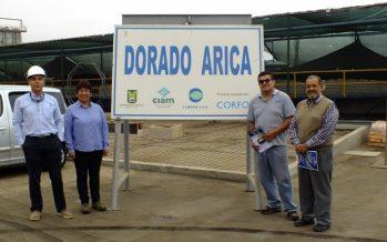 Los avances del proyecto que busca cultivar Seriola lalandi en Arica